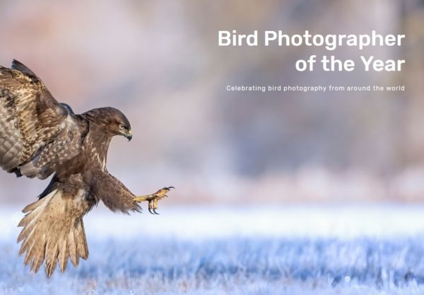 BPOTY 2019 Bird Photographer of the Year