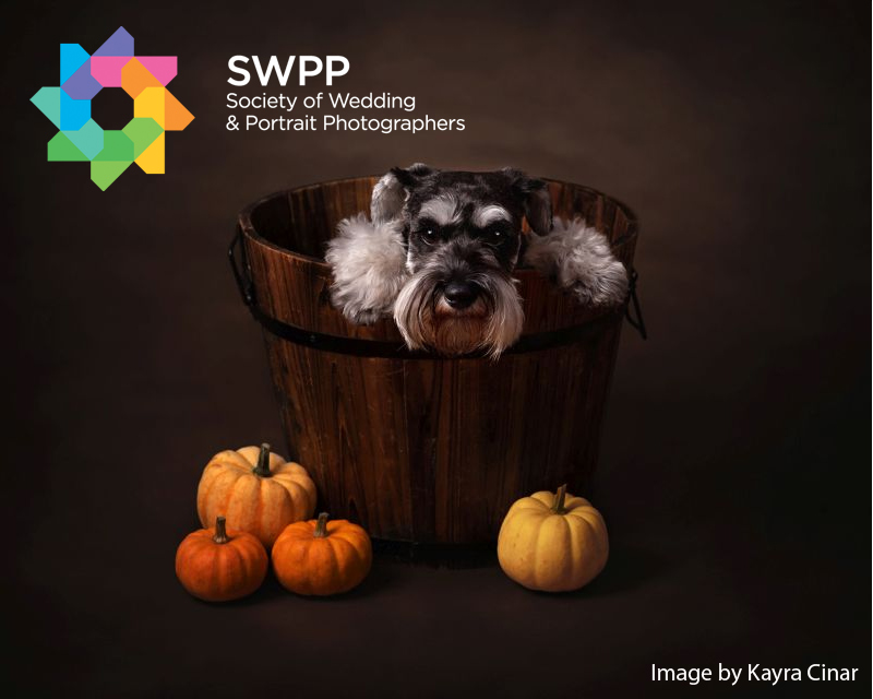SWPP Autumnal Portraits Photography Competition