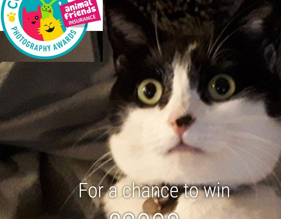 Comedy Pet Photo Awards